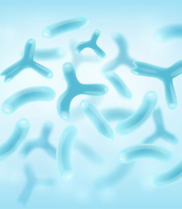 exemple Bifidobacterium animalis lactis