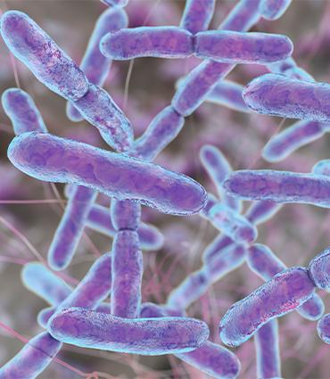 exemple Bifidobacterium infantis