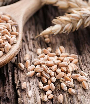 exemple Céramides de blé