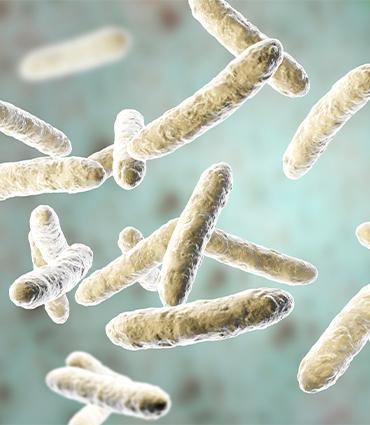 exemple Lactobacillus plantarum BG112