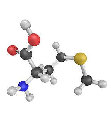 schéma Méthionine