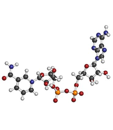schéma Nicotinamide Adénine Dinucléotide