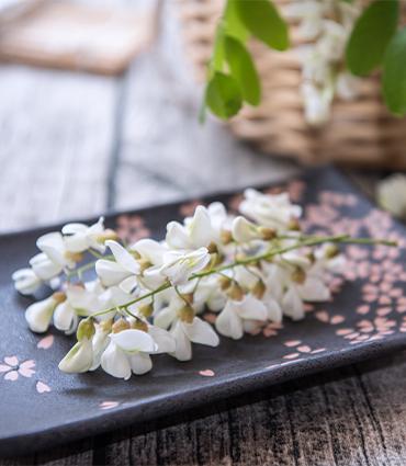 exemple Sophora japonica